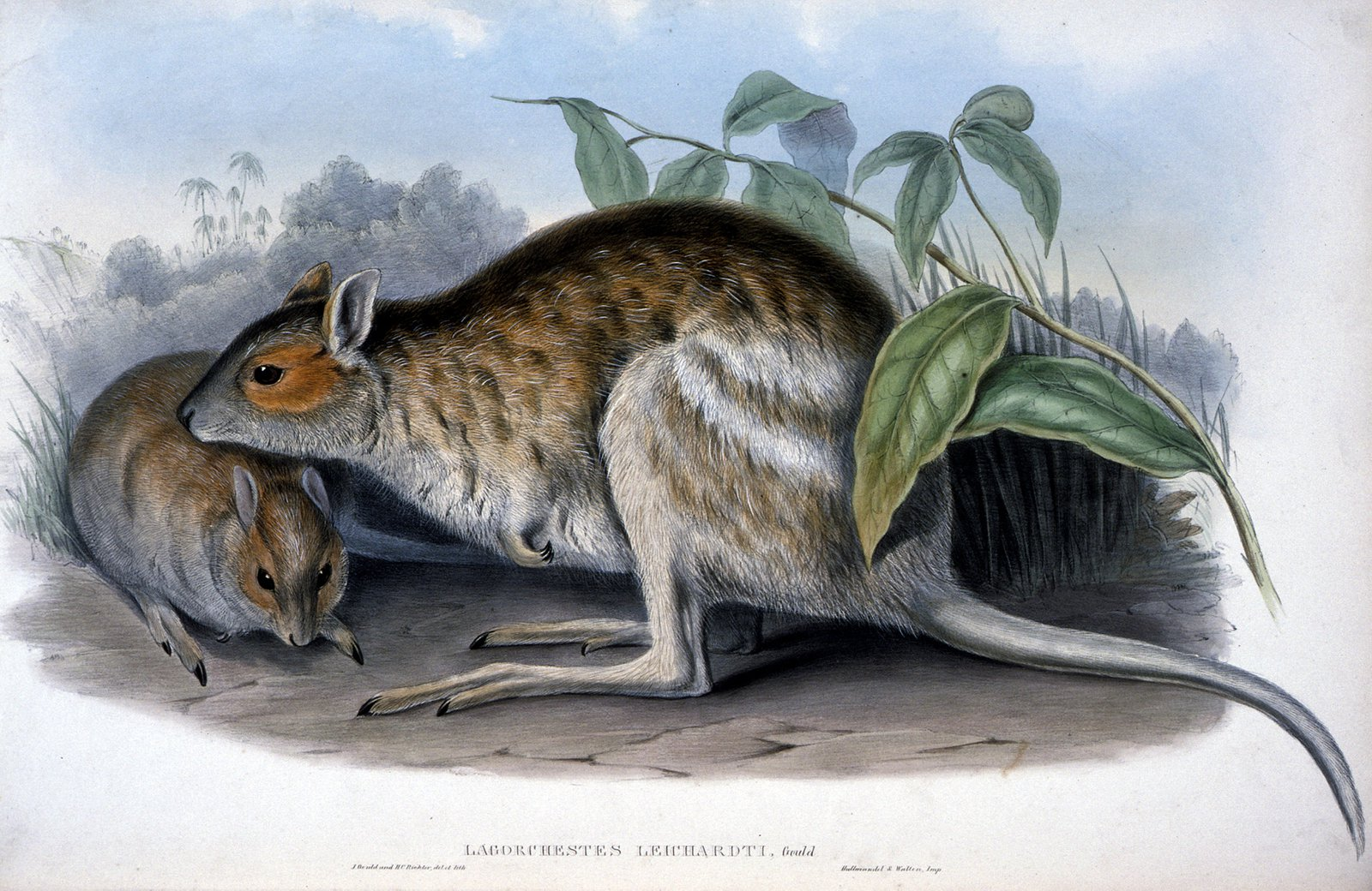 The mammals of Australia / by John Gould.
