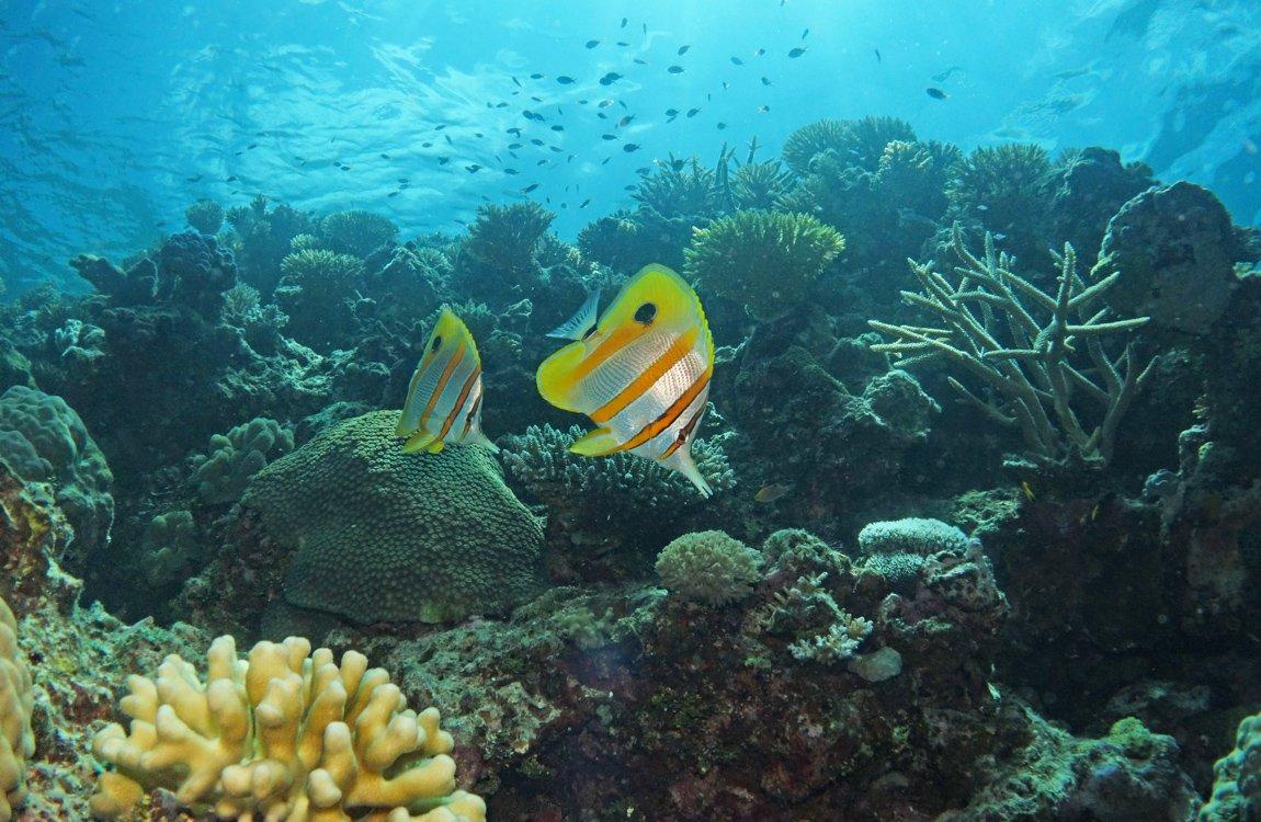 Lizard Island Research Station, Great Barrier Reef