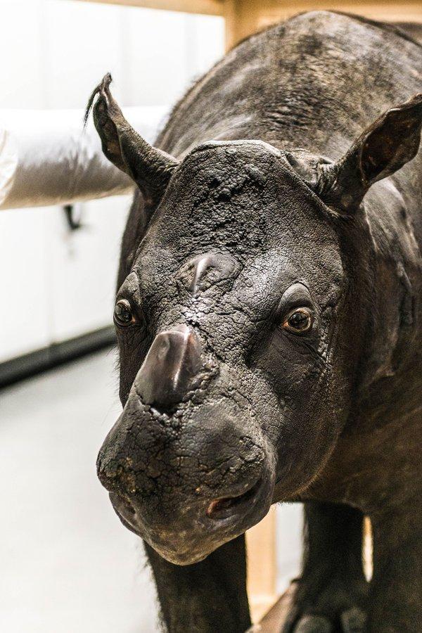 AM Discovery Centre complex showcasing rhinoceros