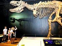 Tyrannosaurs Meet the Family exhibition