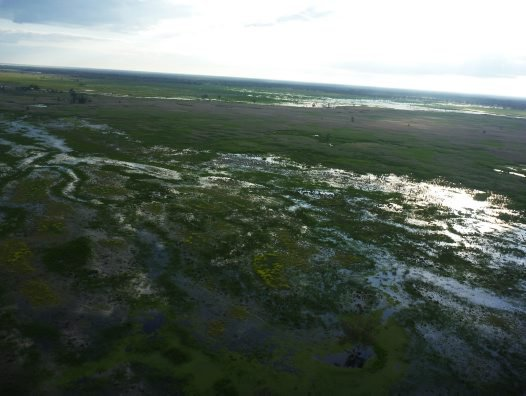 Macquarie marshes in flood