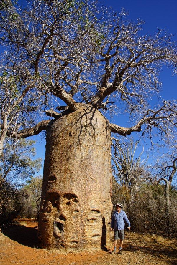Madagascar 2012 - Ancient Baobab