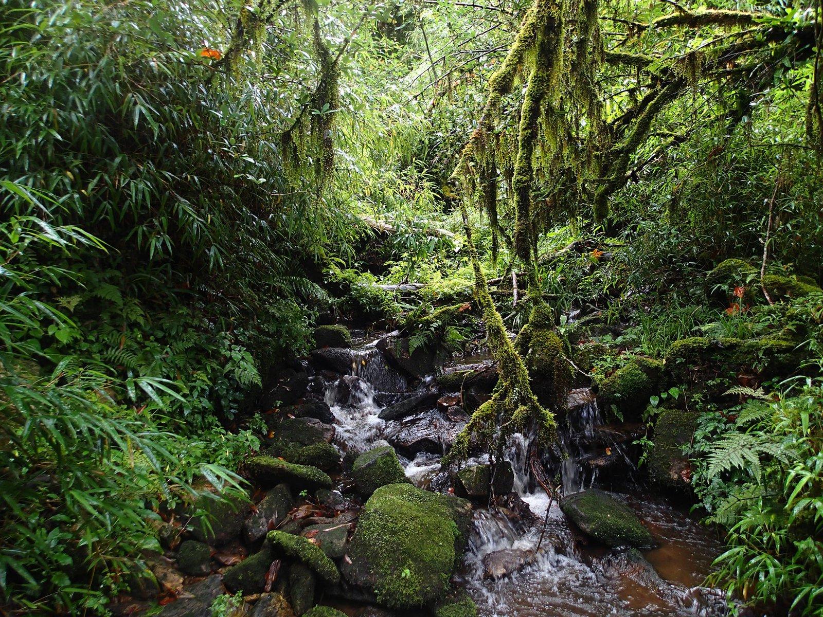 Habitat of the Mount Ky Quan San Horned Frog (Megophrys frigida).