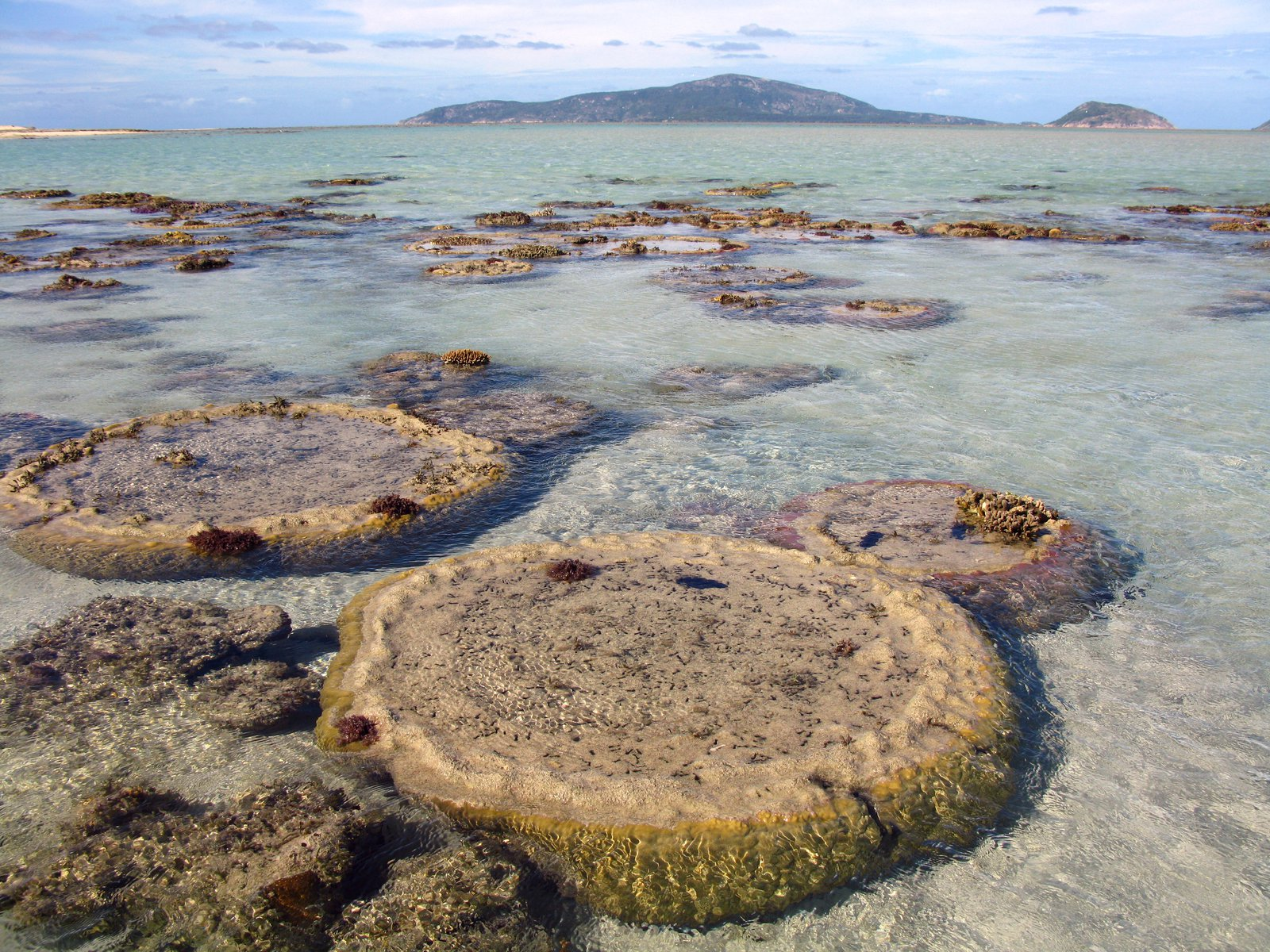 Microatolls at Eyrie Reef