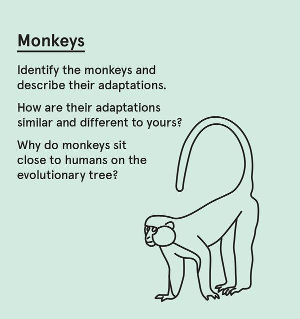 ED_WP_S - Monkey