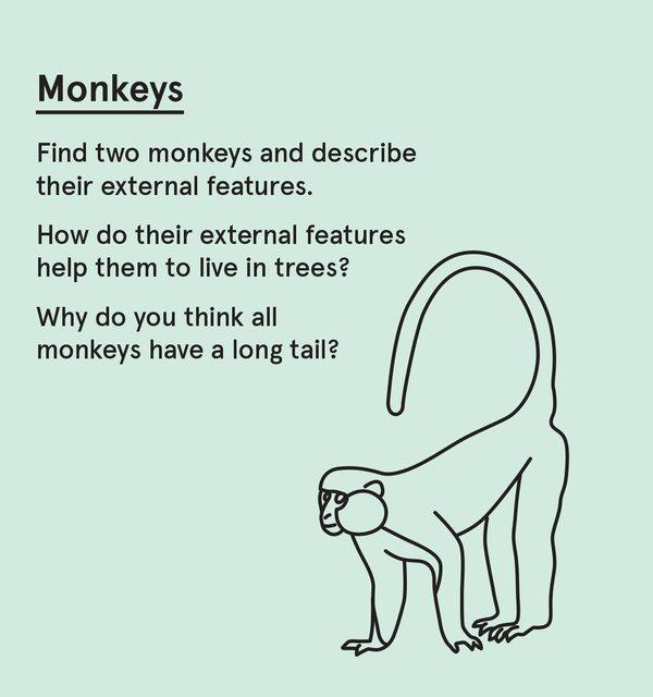 ED_WP_P - Monkeys