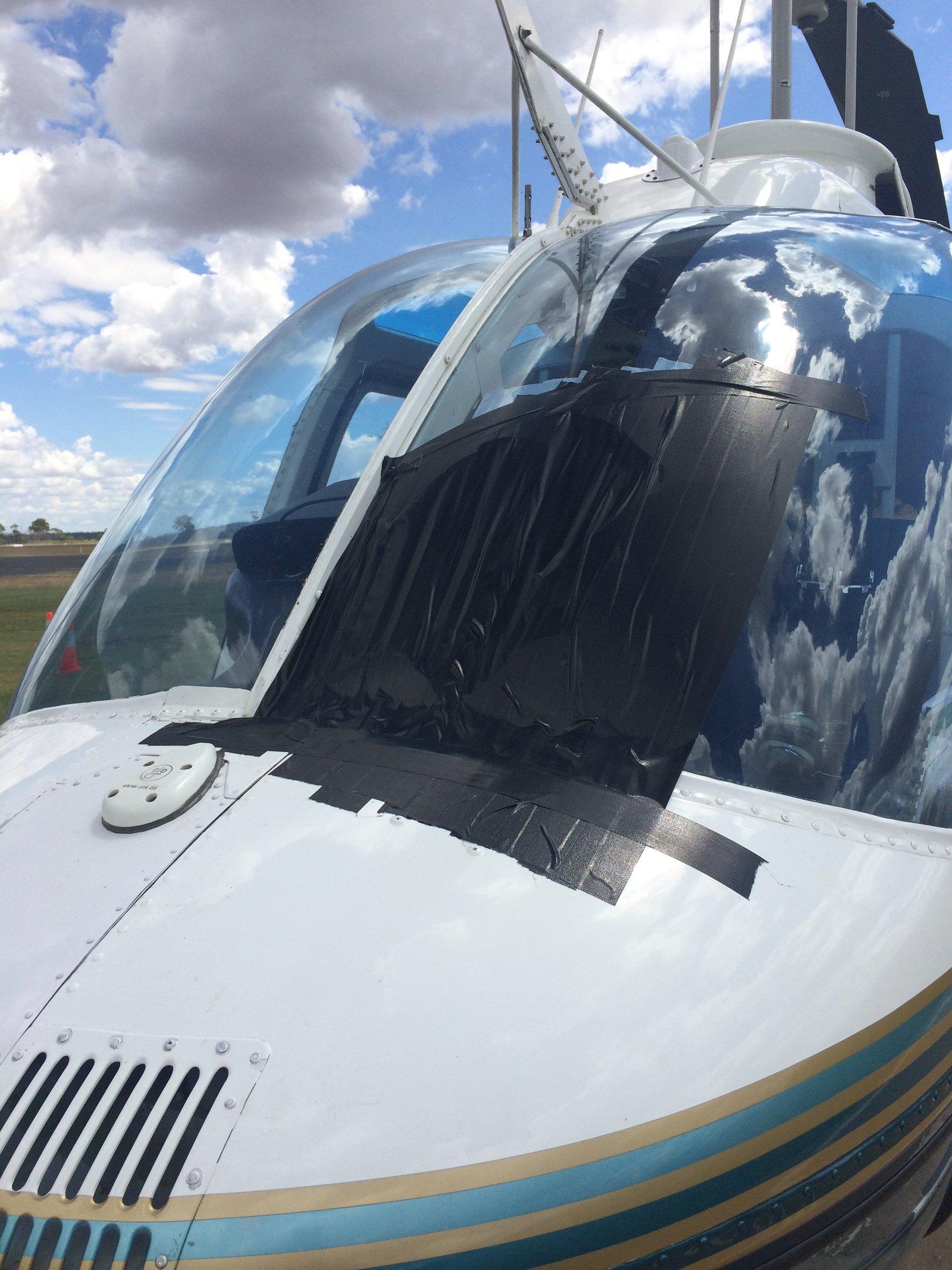 <i>Hirundapus caudacutus</i>helicopter damage