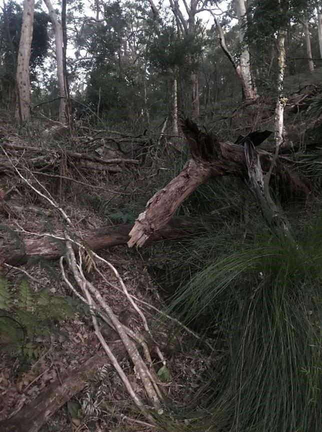Red-crowned Toadlet habitat