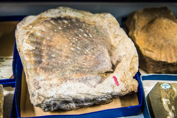 Palaeontology collection fossil