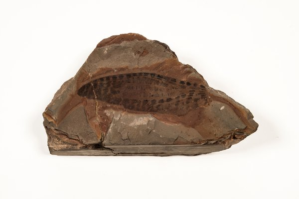 Clatrotitan scullyi