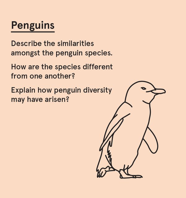 ED_SurvAus_S - Penguin