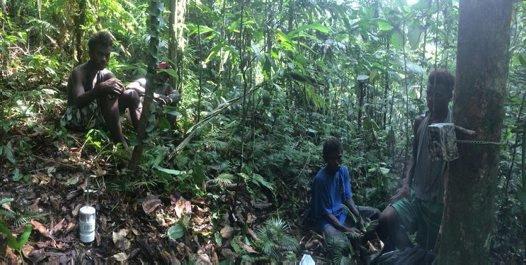 Solomon Islands Mammal Research