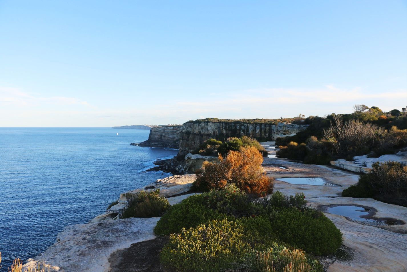 North Head is a patch of isolated habitat that is almost completely surrounded by water – it has bandicoots literally living on the 'edge'.