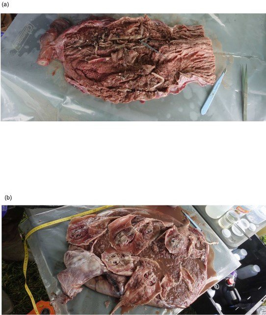 Gut contents from the hammerhead shark.