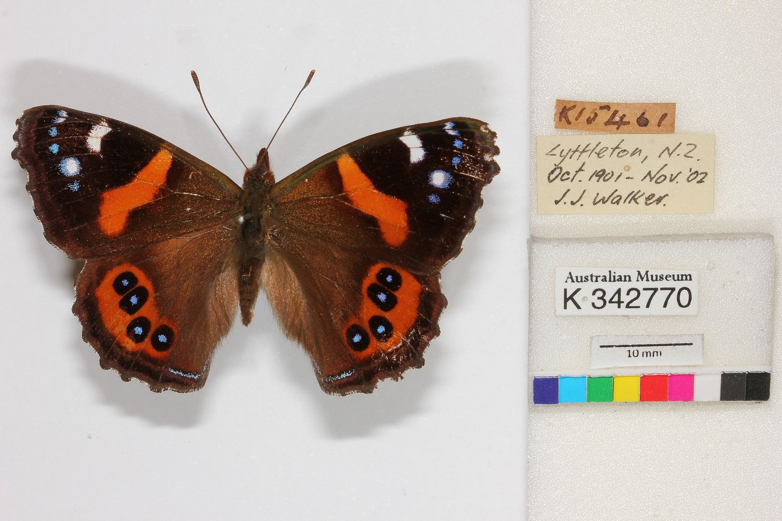 Specimen label from the AM