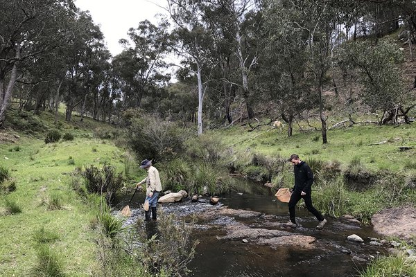 In search of the Peppered Tree Frog, New England Tablelands