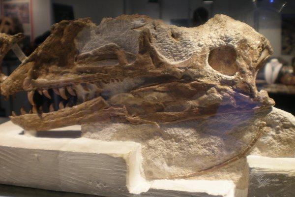 Proceratosaurus bradleyi