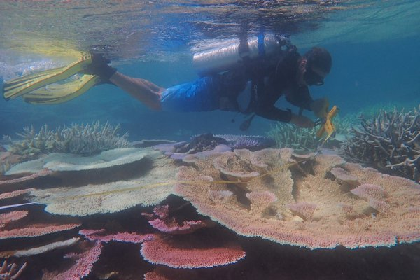 Professor Andrew Hoey from the ARC Centre of Excellence for Coral Reef Studies at James Cook University rolls out a transect tape on the shallow reef crest. This work involved visual surveys of conspicuous fishes and corals to assess their diversity