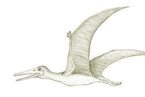 Australia's extinct animals, the Queensland Pterosaur