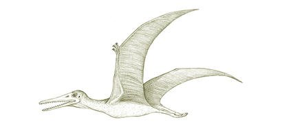 Australia's extinct animals, the Queensland Pterosaur