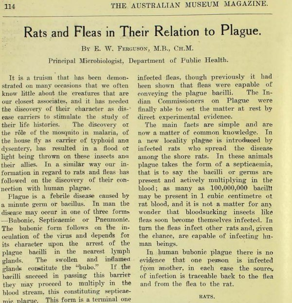 Annual Report of 1922: Rats and fleas in relation to plague