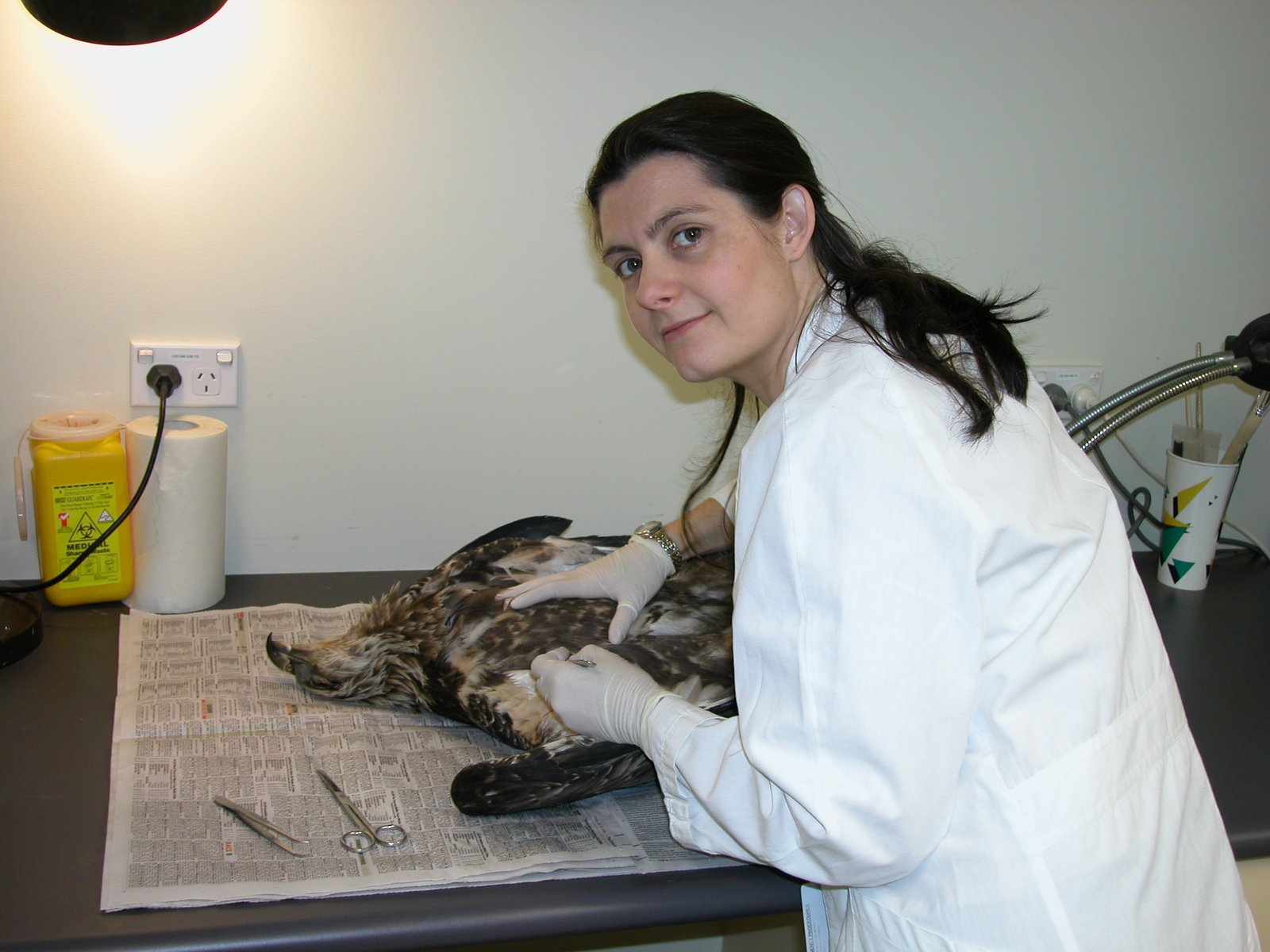 Rebecca Johnson working on an Eagle