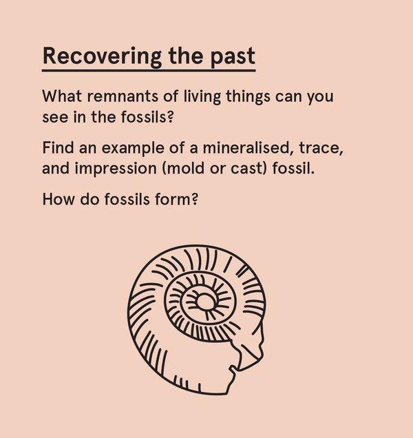 ED_Dino_S - Fossil