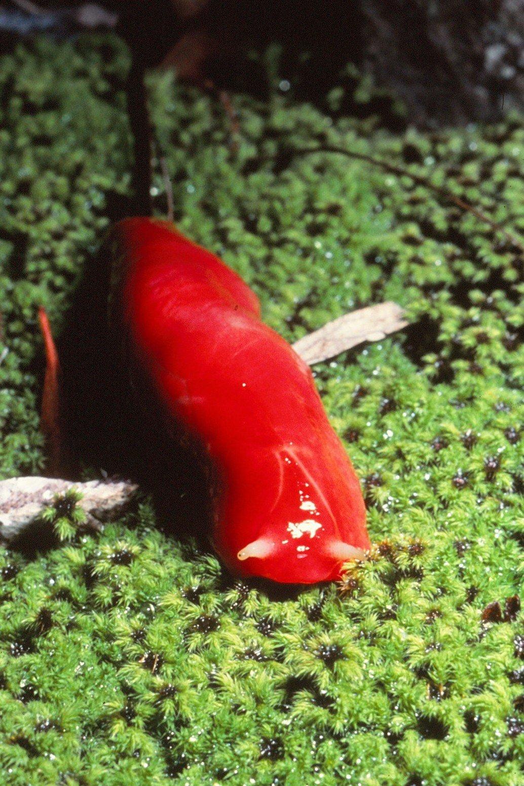 Red triangle slug.