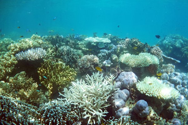 Reef flat in Lizard Island lagoon