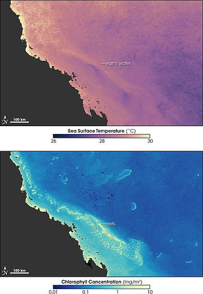 Relationship of water temperature to coral bleaching along the Great Barrier Reef