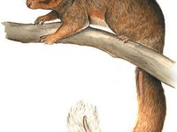 Riversleigh Sprite Possum