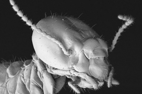 SEM of a termite worker