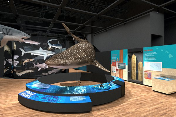 Touring Exhibition: Sharks render 10
