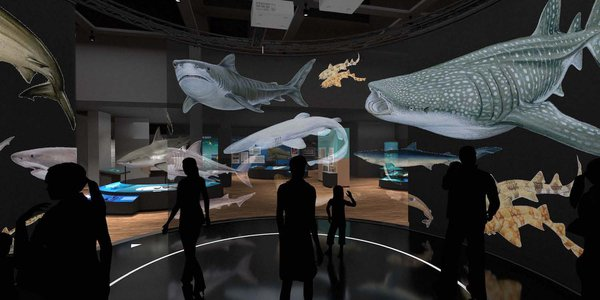 Touring Exhibition: Sharks render 12