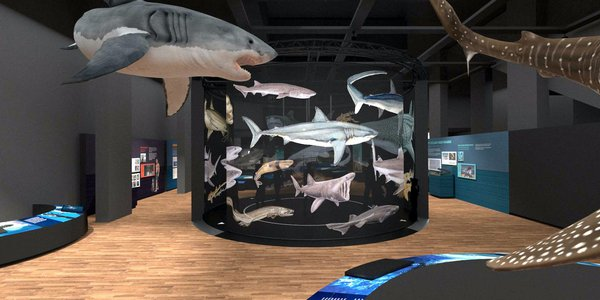 Touring Exhibition: Sharks render 50