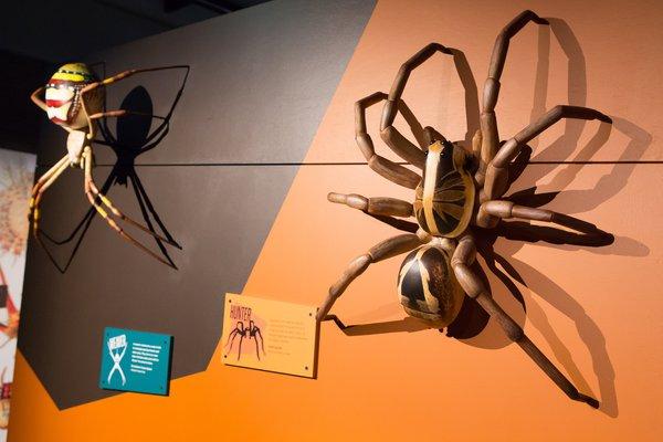Spiders exhibition at Questacon (3)