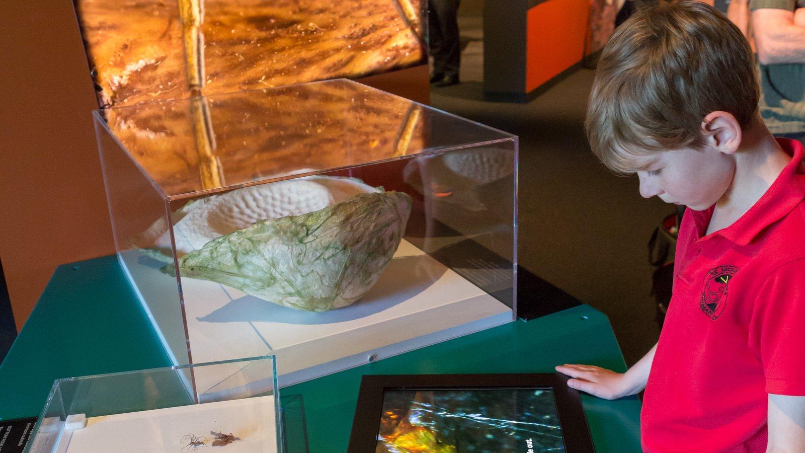 Spiders exhibition at Questacon (8)