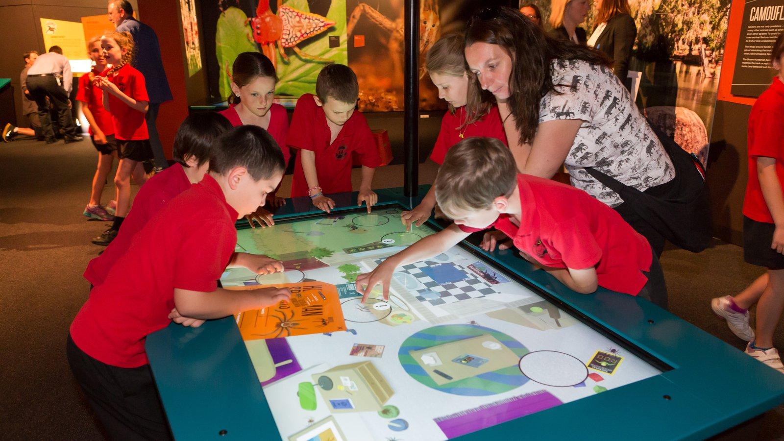 Spiders exhibition at Questacon (10)