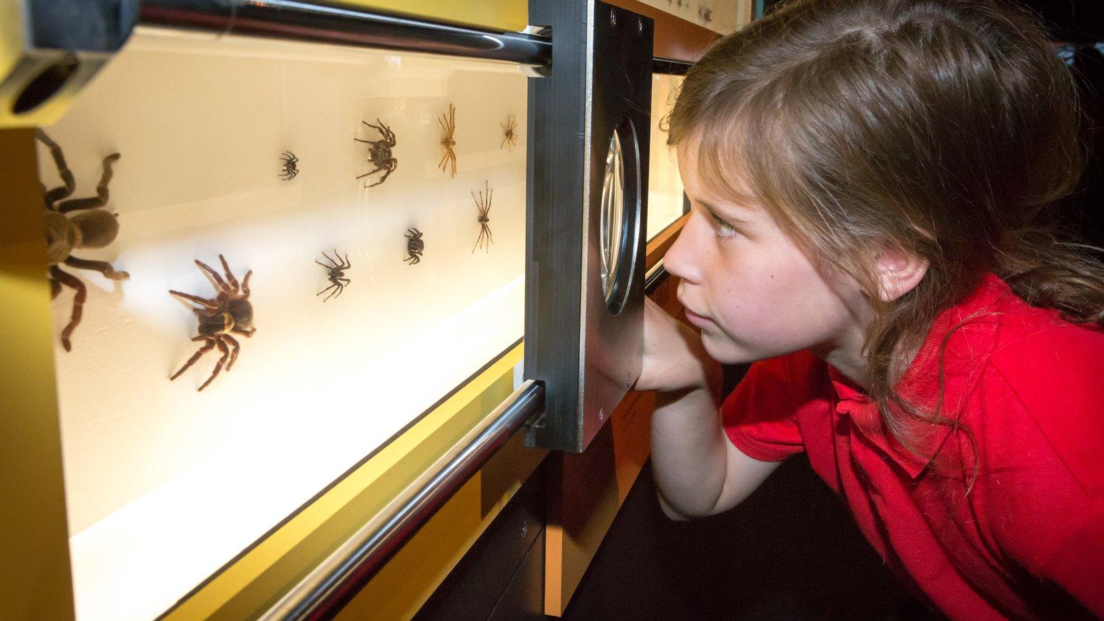Spiders exhibition at Questacon (14)