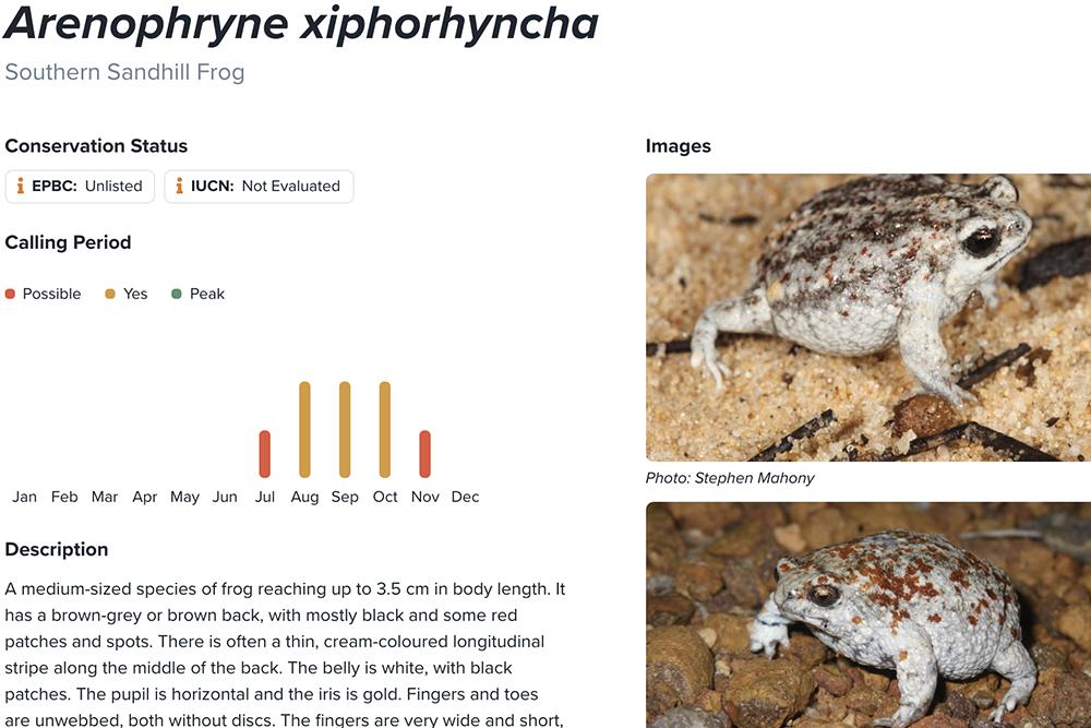 Southern sandhill frog fact sheet