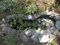 Fabricated frog pond