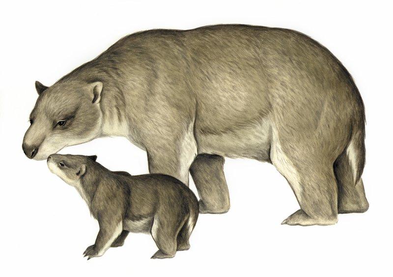 Australia's extinct animal, Silvabestius johnnilandi