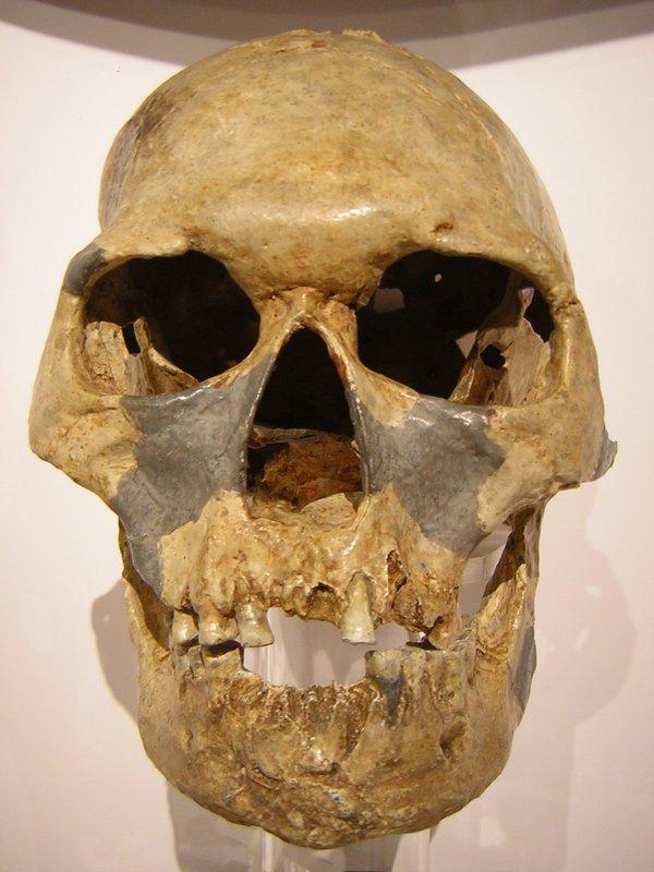 Skull cast front Homo sapiens Minatogawa 1