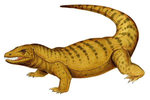 Australia' extinct animal, Megalania prisca