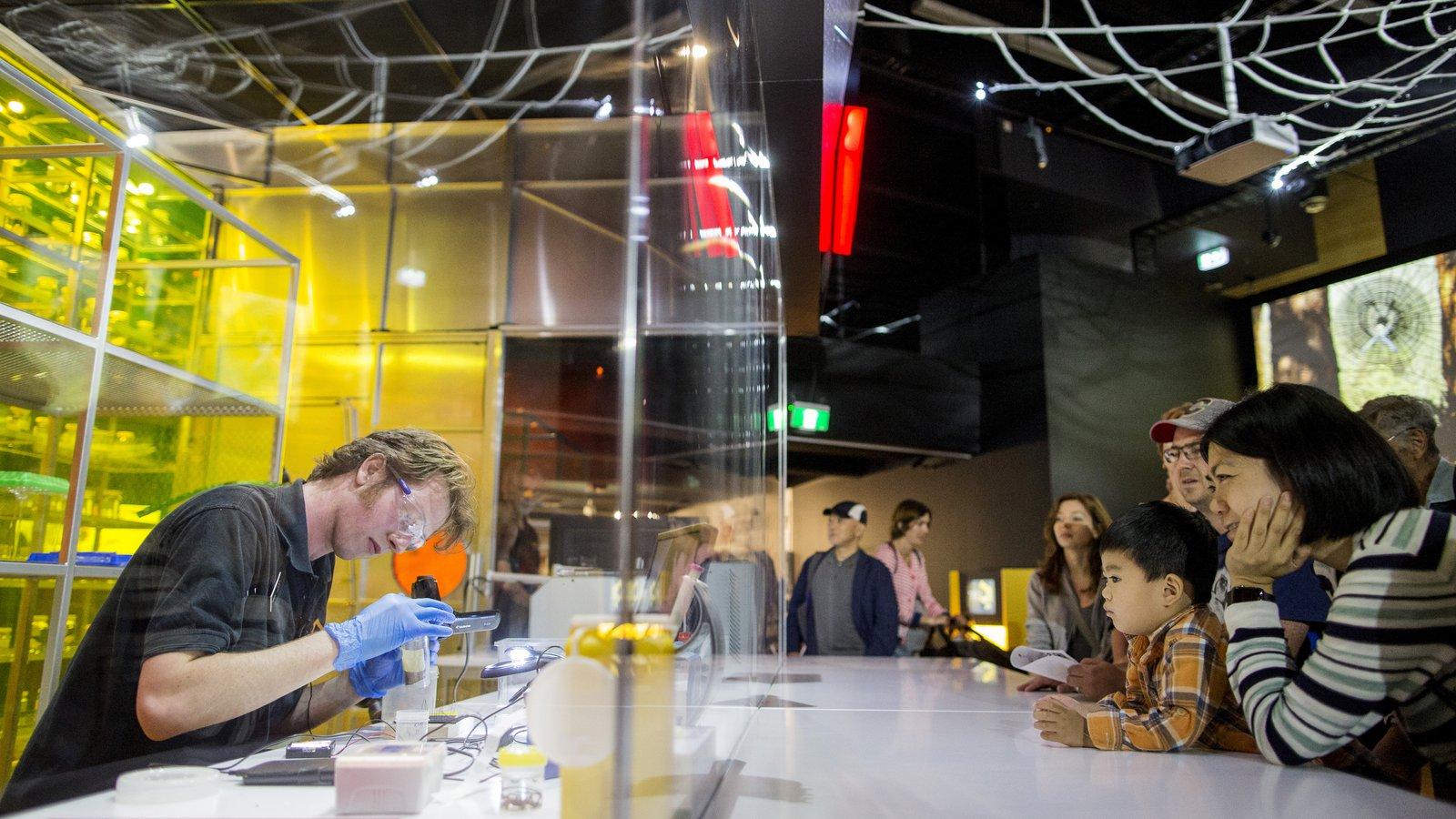 Spiders Exhibition - Venom Lab