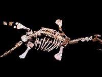 Umoonasaurus demoscyllus