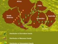 gondwana fossil map