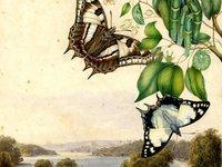 Tailed Emperor by Helena Scott