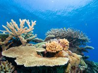 Coral diversity, Great Barrier Reef
