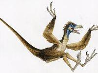 Sinornithosaurus.